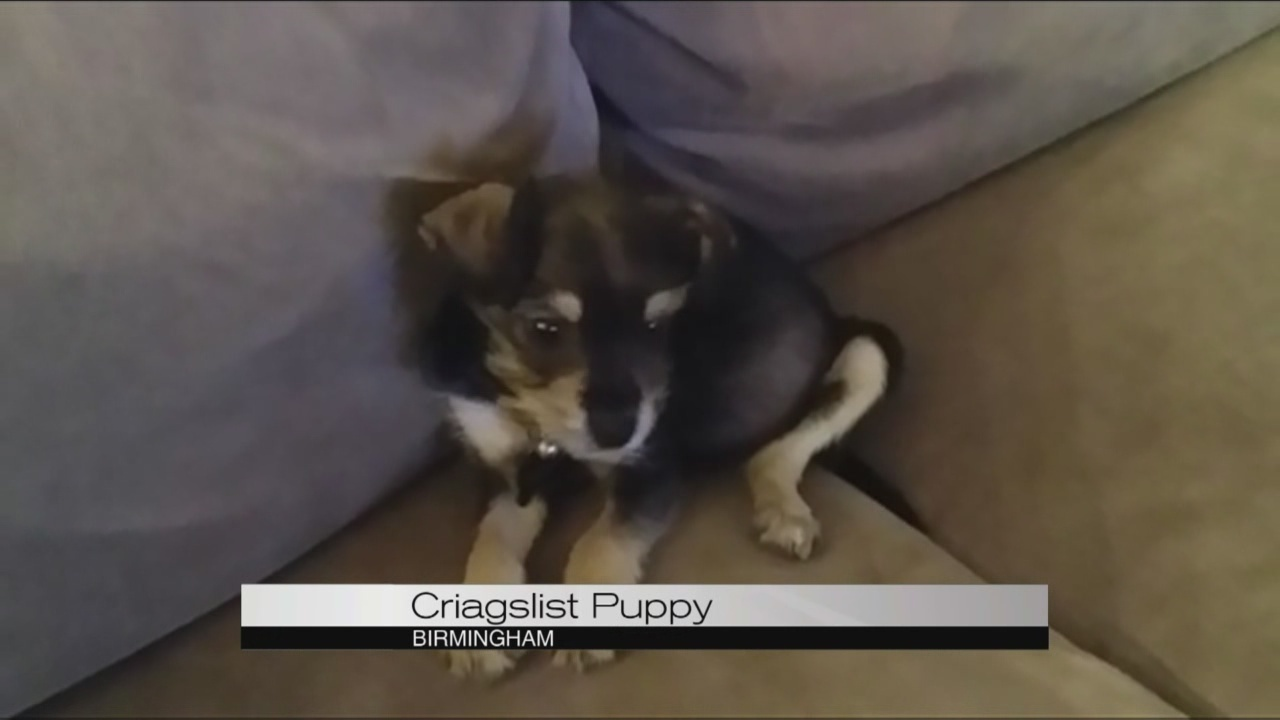 Man warns others after buying puppy on Craigslist